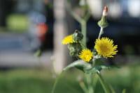 Phoenix Area Weed Control