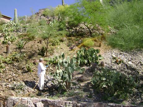 desert landscape weed control